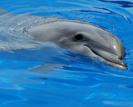 Delfin Durmiendo