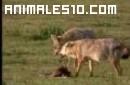 Animales salvajes y peligrosos 2