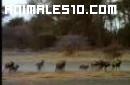Animales salvajes y peligrosos