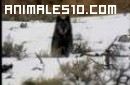 Origenes de Perros y Coyotes