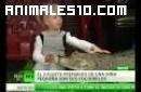 Una niña y sus mascotas los cocodrilos
