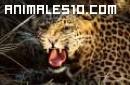 Animales que viven en nuestro planeta