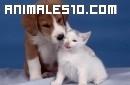 El juego del gato y el perro