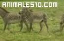 Animales salvajes y su vida