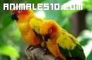 Las 10 aves más hermosas del mundo