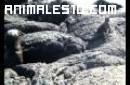 Leones marinos e iguanas