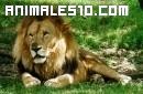 Recopilación de animales salvajes