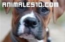 Un perro pelea con un bebé por su comida