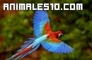 Un vídeo de aves exóticas