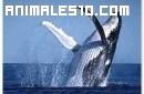 Una ballena se estrella contra un bote