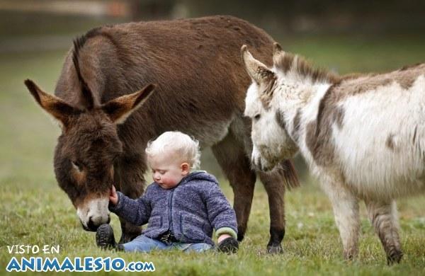 Adorables burros