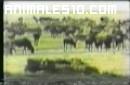 Calor en la Fauna Africana