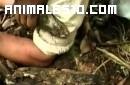 Anaconda muerde a un reportero