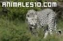 Los siete animales secretos de Africa