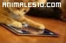 Animales desubriendo los Ipads