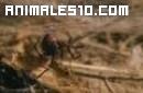 Arañas, el superviviente total