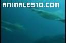 Nacimiento de los calamares