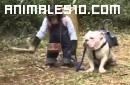 Chimpace y perro buscadores de trufas