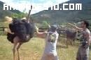 Dando de comer a un avestruz