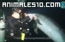 Delfín pide ayuda y es salvado