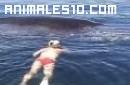 Delfin salva a una embarazada