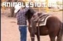 Domar caballos sin violencia