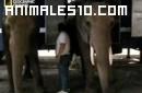 La escapada mortal de un elefante de circo