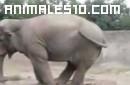15 videos animales graciosos