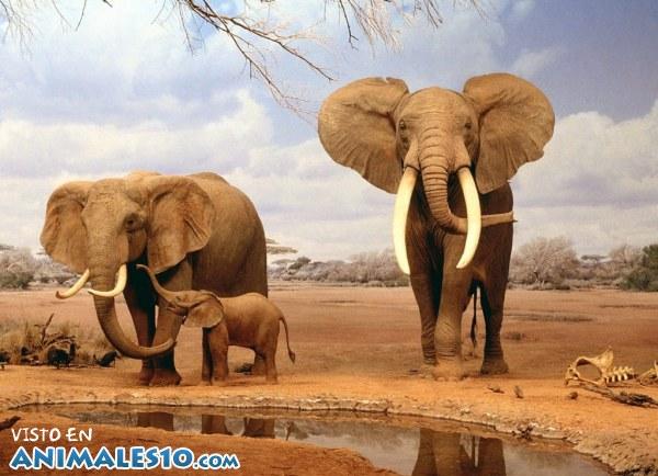 Elefantes con su cría