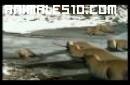 Evolución de los Animales en la Tierra