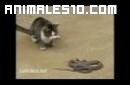Gato se enfrenta a una serpiente y la mata