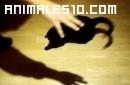 Gato confundidos por sombra de mano