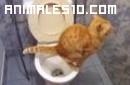 El gato mas limpio del mundo