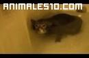 A estos gatos si les gusta el agua