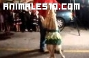 Golden Retriver bailando salsa