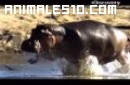 Estación seca en el Mundo Animal