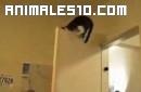 Sorprendentes gatos acrobatas