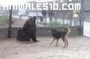 Leon marino y perro por la ciudad