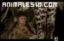 Leopardo adopta a cría de babuíno