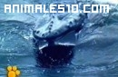 Las ballenas, el maravilloso mundo de los animales