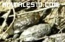 Nacimiento de una tortuga
