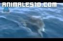 Nacimiento de delfines en Israel