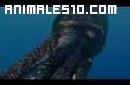 Ortocono un calamar gigante de otras epocas