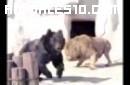 Enfrentamiento imprevisto en el Zoo