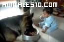 Perro y bebé peleando por la comida