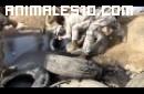 Militares salvan dos cachorros en Chile