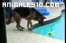 El perro, la pelota, la piscina y la mujer gorda