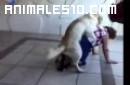 Pasion de perro
