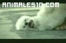 Un suicidio canino