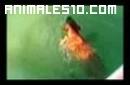 Perro ataca tiburon